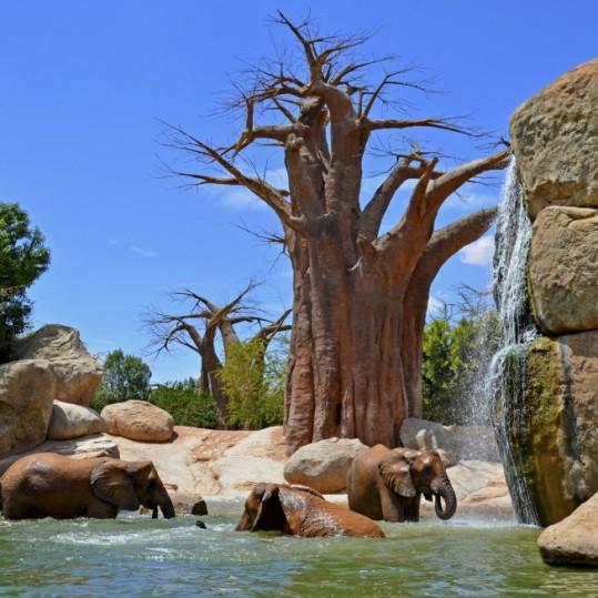 Bioparc-Valencia-Sabana-africana-elefantes-lago-elefantes-zooinmersion