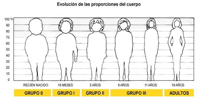 grafico_-_evolucion_de_las_proporciones_del_cuerpo